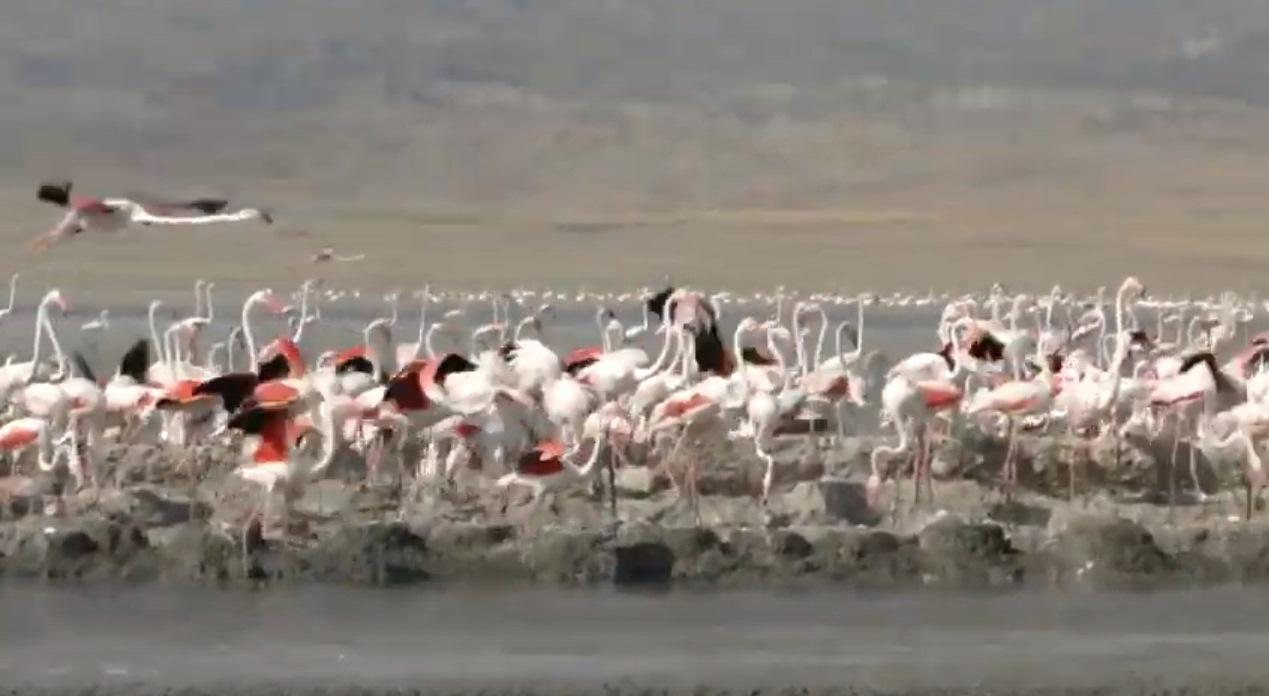 2015-ci ildə Acınohur gölündə kifayət qədər su var idi
